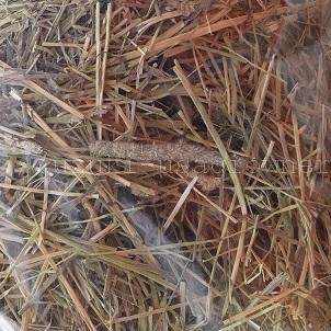 新しい牧草を試してみた カナダ産ハイミネラルチモシー