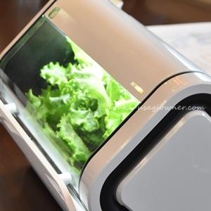 LEDで簡単、土の栽培より栄養価が高い野菜をうさぎにも! 水耕栽培セット「やさい物語」
