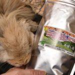 うさぎ本来の生態の食がそのままに デリスタイル「食育牧草」