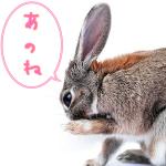 【MTGからお知らせ】アフィリエイト・プログラムの広告停止