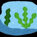 お通じの薬を頼る前に試してごらん 「海藻」