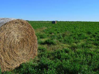 オーツヘイは食べ放題でOKな牧草