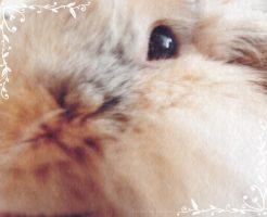 うさぎの虎次朗の顔アップ