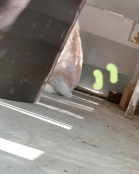 大きな植木鉢からしっぽを覗かせている虎次朗