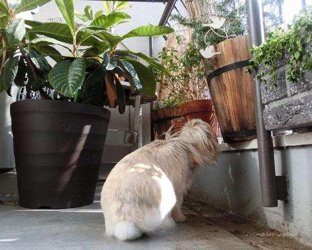 ローズマリーの植木鉢の匂いをかぐ虎次朗