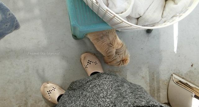 洗濯物を干している飼い主の傍に来るうさぎの虎次朗
