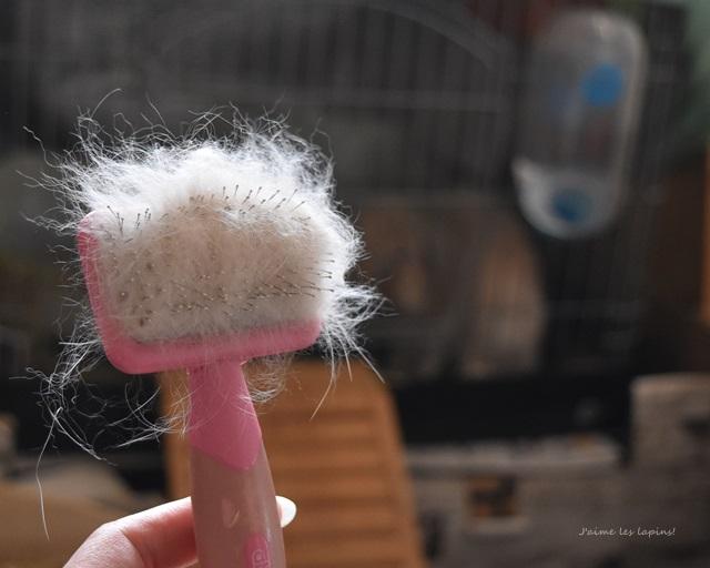 簡単にグルーミングをしたあとの、うさぎの毛が沢山付いたスリッカーブラシの正面。後ろにうさぎが映っている。