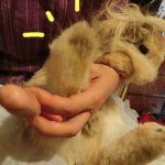 うさぎの換毛と気圧の変化