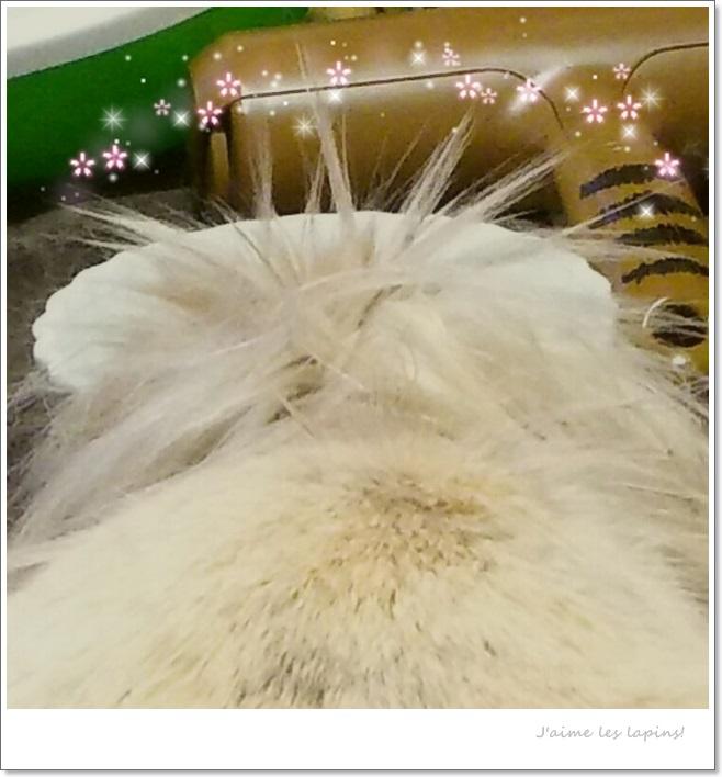頭の毛が放射線状に広がっている、うさぎの虎次朗の頭