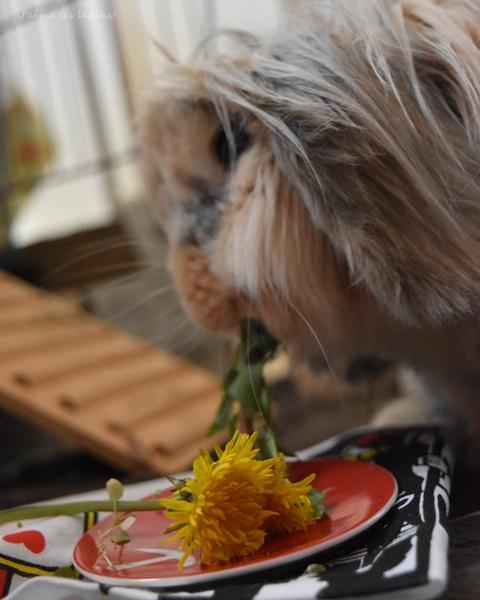 タンポポを美味しそうに食べる虎次朗