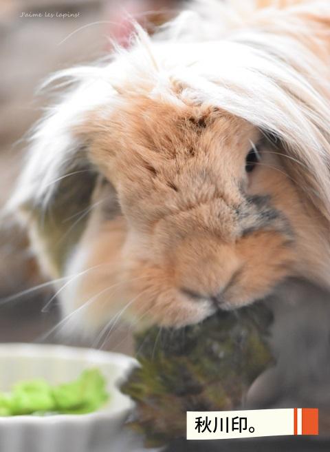 秋川牧園の野菜を食べるうさぎの虎次朗