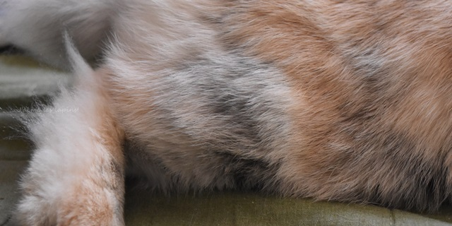 うさぎの虎次朗の名前の由来