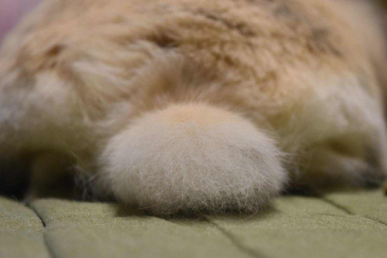 うさぎブログ「うさぎが好き!」ヘッダー画像
