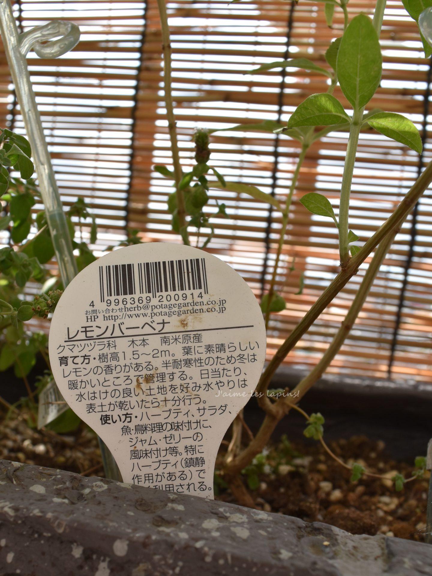 バーベナうさぎ苗の札