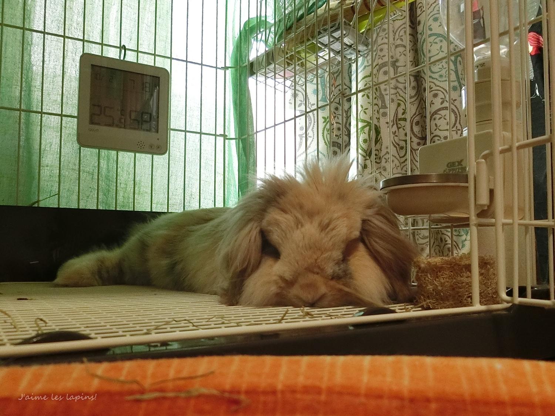 シニアウサギの虎次郎