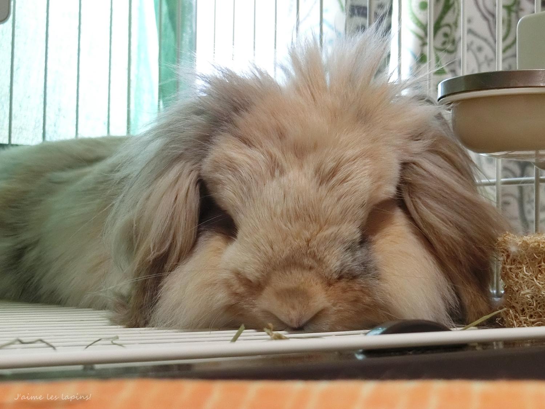 シニアウサギの虎次郎モフモフ顔アップ