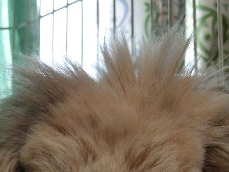 シニアウサギの虎次郎のクラウン