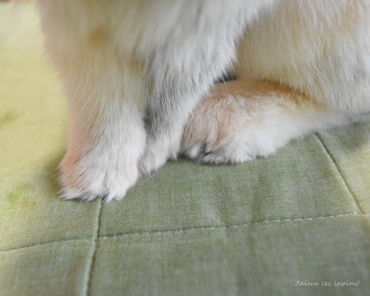うさぎの前足アップ1