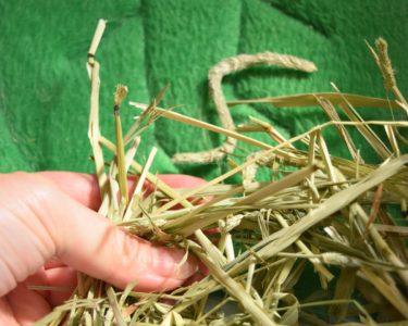 Charmのアメリカ産プレミアムチモシー1番刈りは、我が家のうさぎの定番牧草