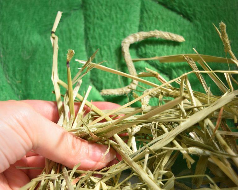 アメリカ産プレミアムチモシー1番狩りを持っている手