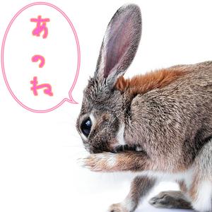 お知らせウサギ