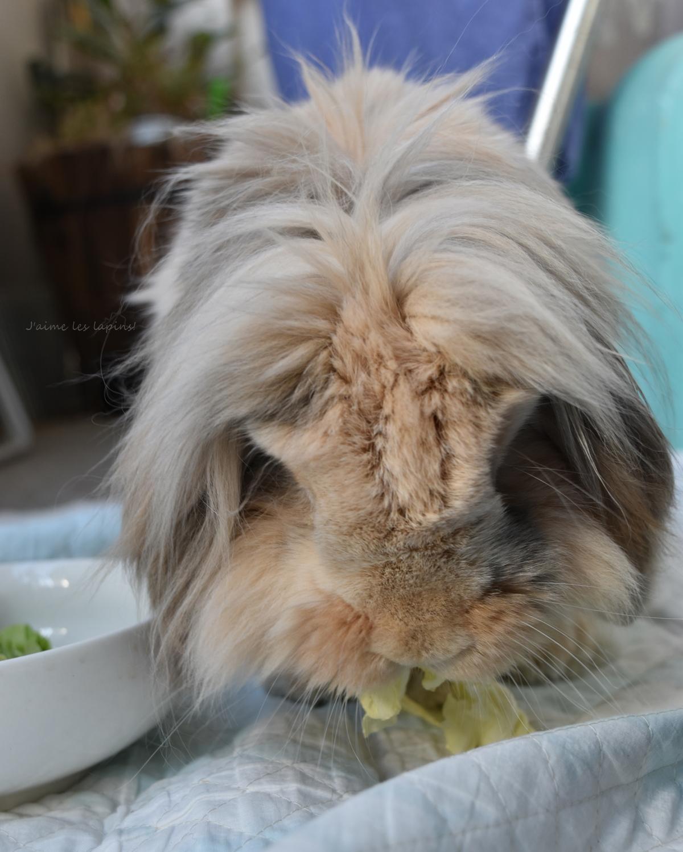 ベランダで野菜を食べるうさぎ・虎次郎