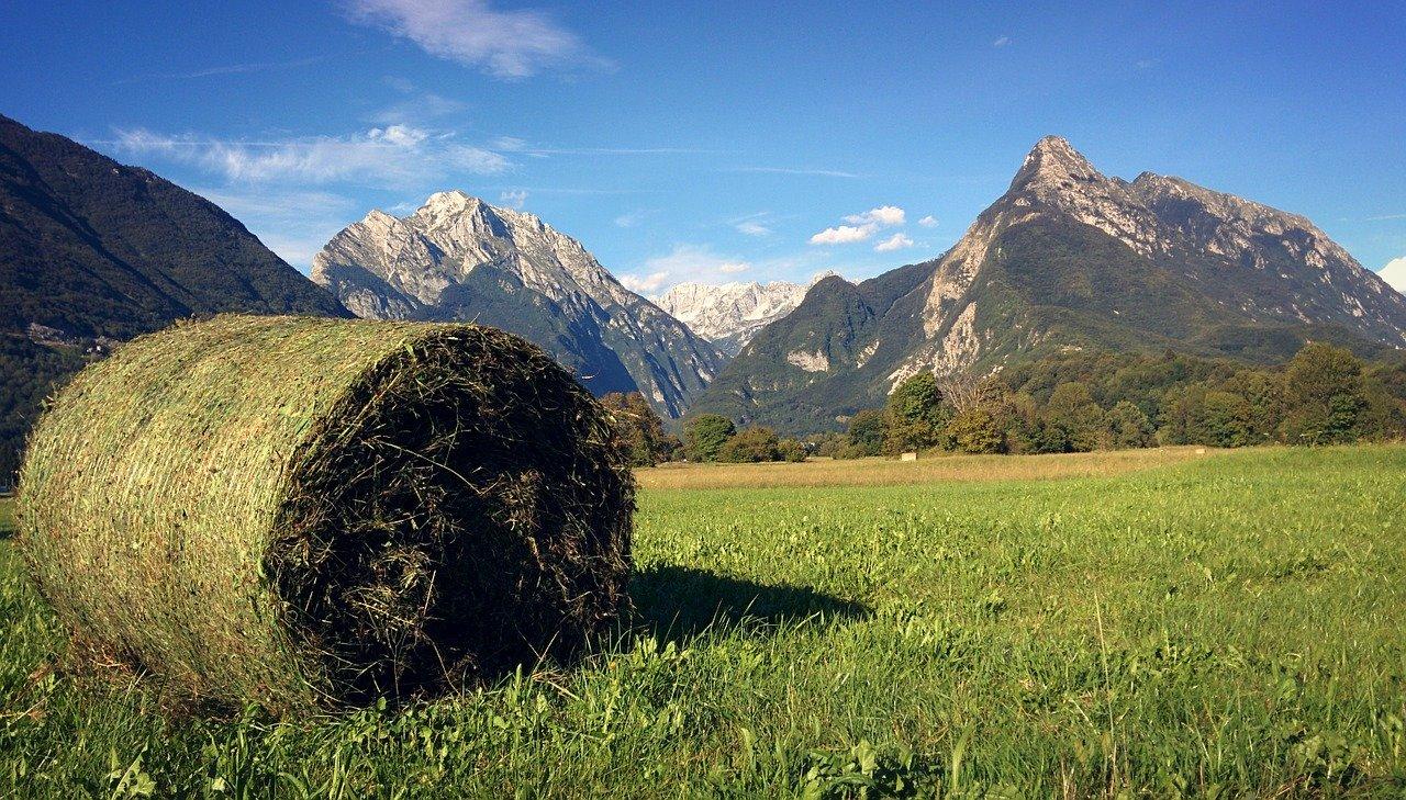 スロベニアの牧草地