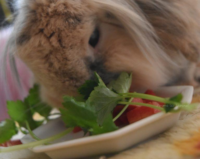 金時人参を食べるお正月のうさぎ