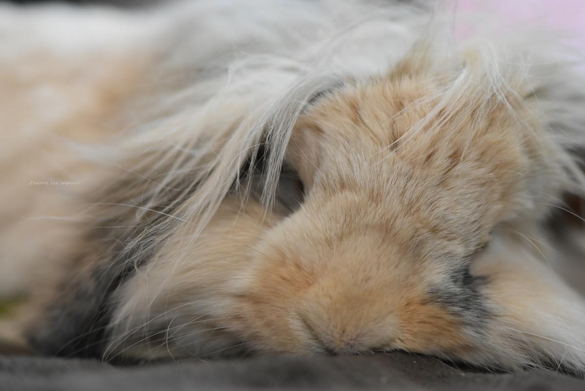 うさぎが昼寝している顔のアップ
