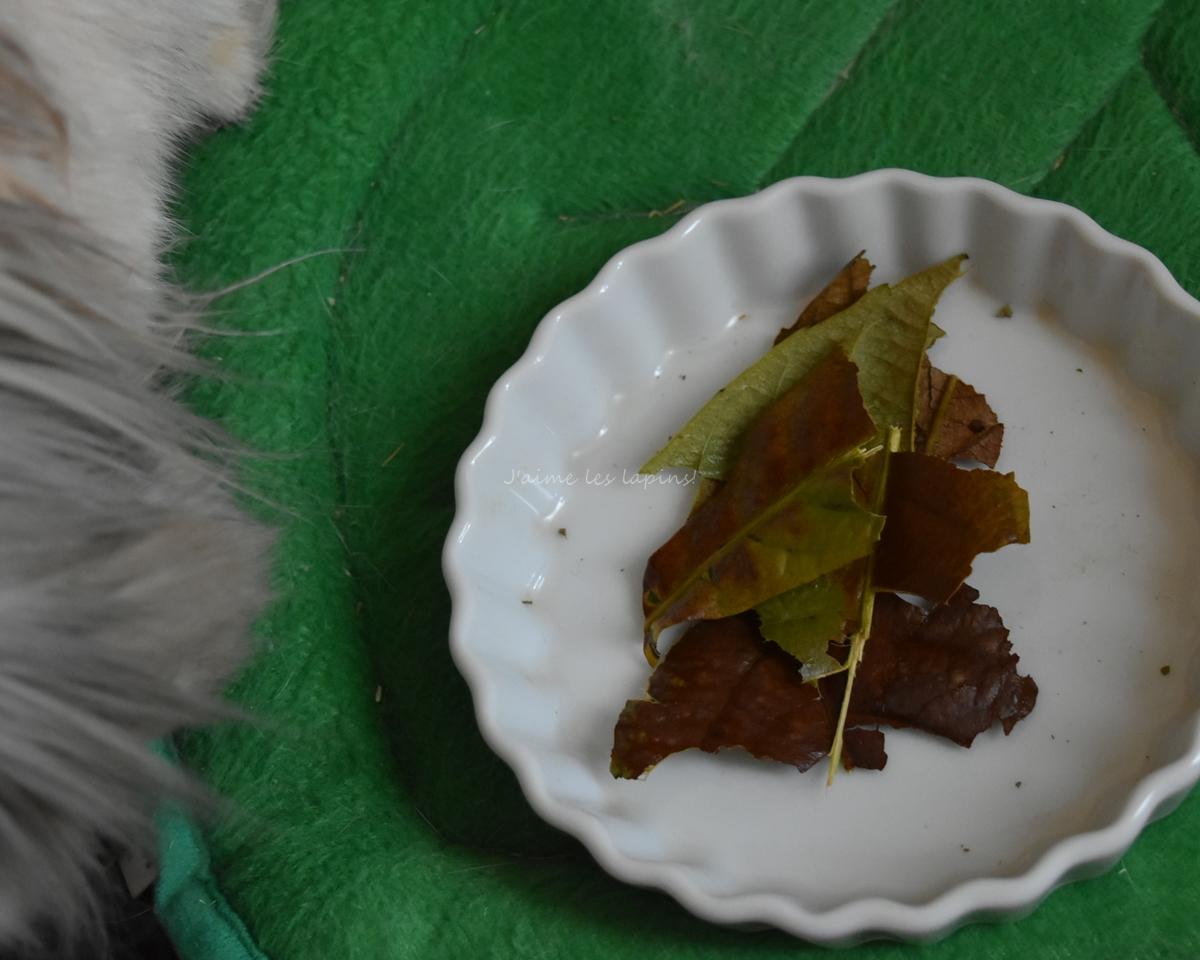 細かくちぎった琵琶の葉っぱ