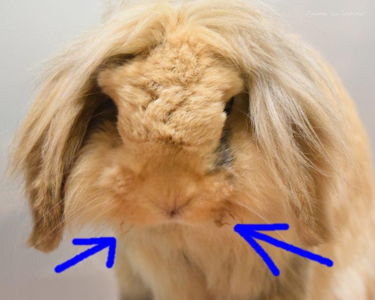 うさぎの顎下左右の毛がガバガバしてる