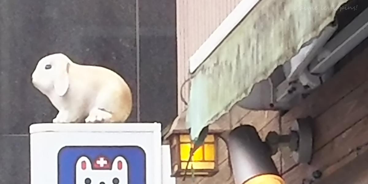 うさぎの診療が得意な石川台どうぶつ病院