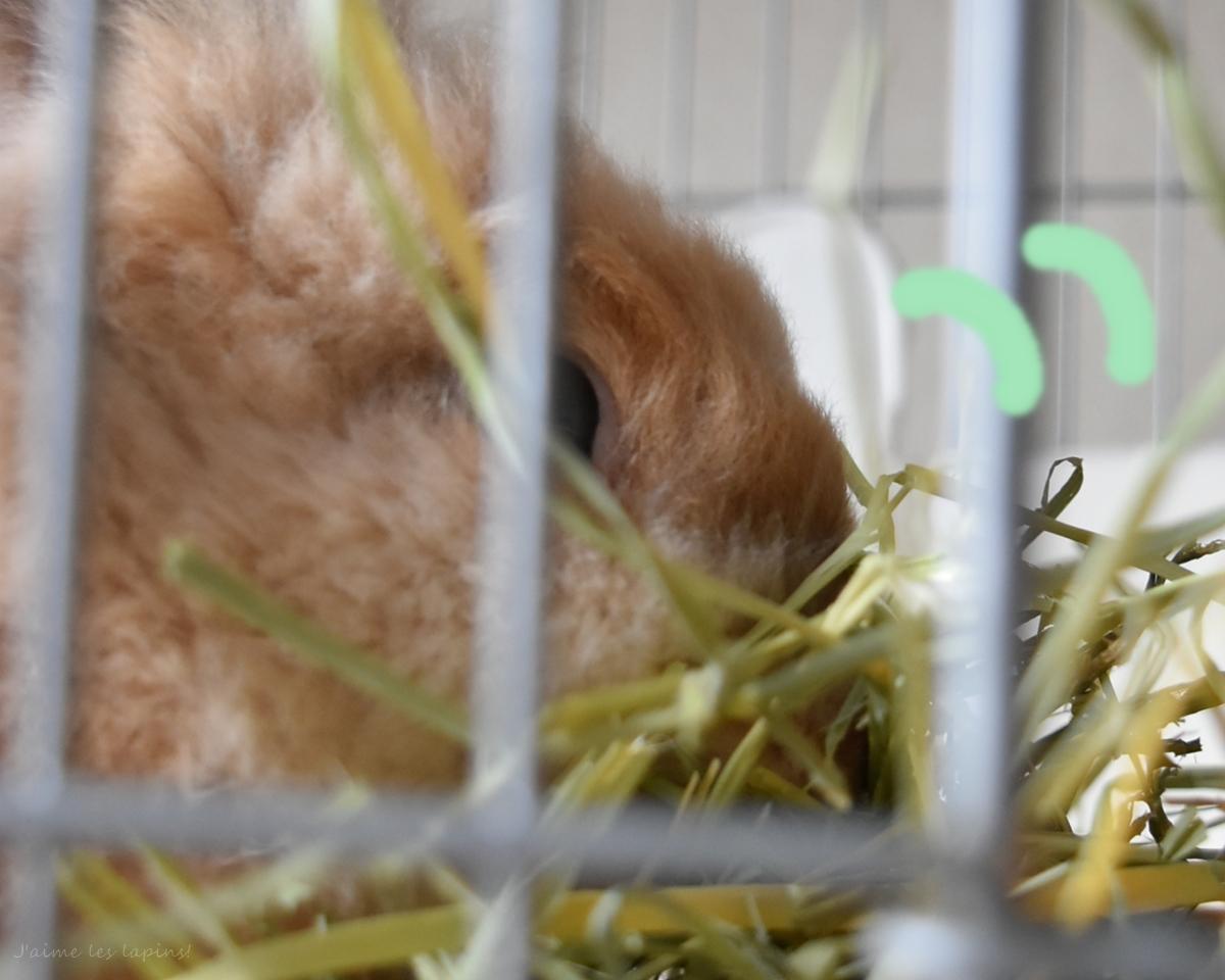 ロングマットを食べるうさぎの小二郎