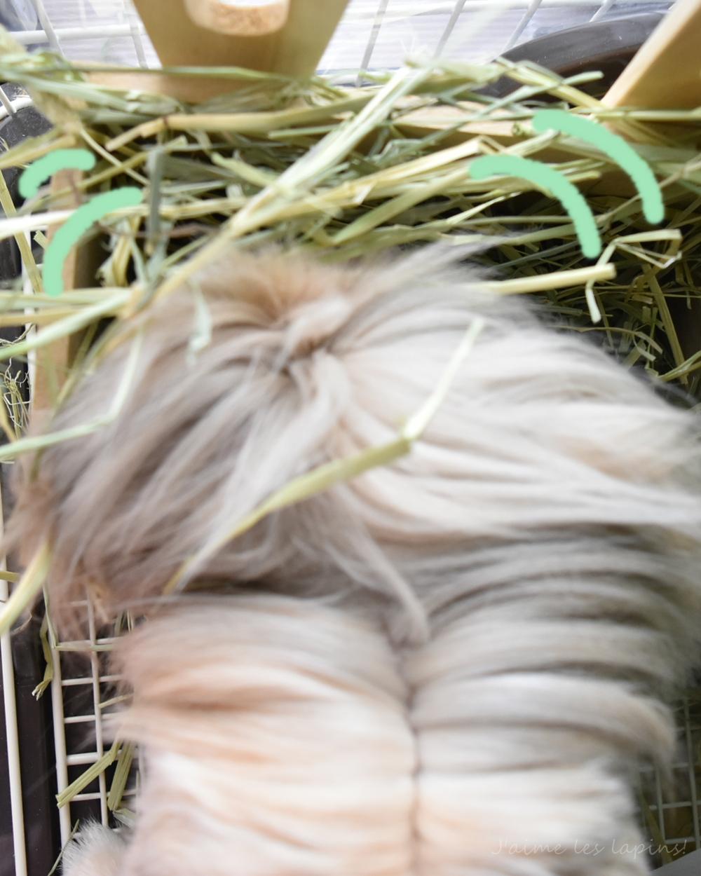ロングマットを食べるうさぎの虎次朗