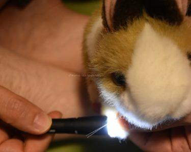 うさぎの爪切り方法(黒い爪の切り方)