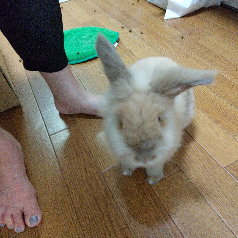 うさぎの小二郎と里親の足