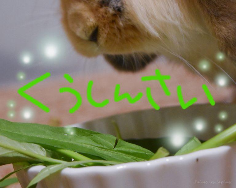 ウサギに与えて良い野菜の空心菜