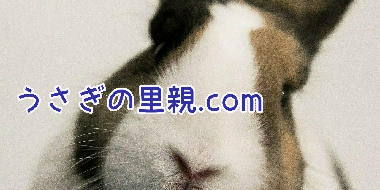 うさぎの里親.comトップページ画像