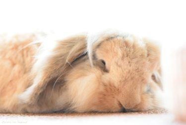 冬支度前の恒例行事、ウサギとピクニック