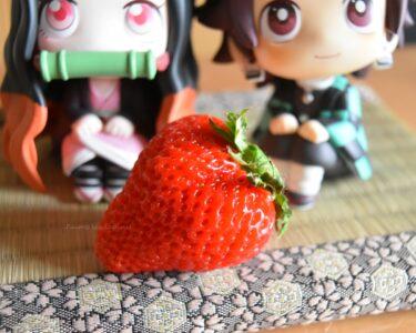 熊本県産イチゴ「ゆうべに」をうさぎと一緒に食べてみた