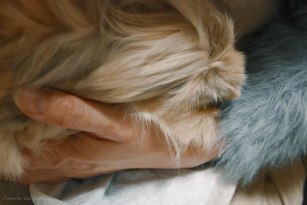 うさぎを抱っこする飼い主の手