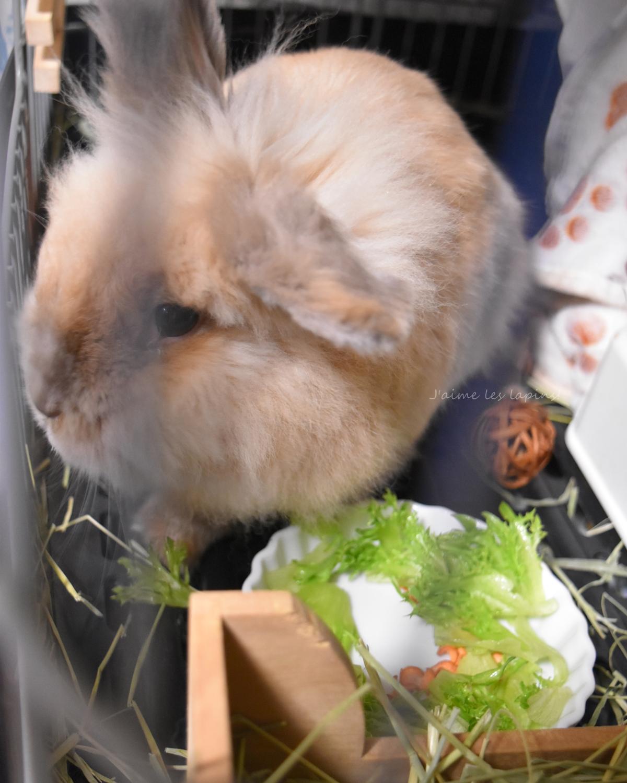 生野菜を食べるうさぎ