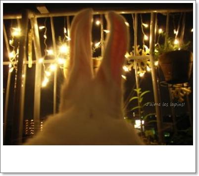 在りし日のうさぎ・白丸の耳