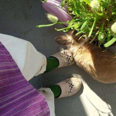 Tabioのオンラインストアで買った春靴下 肌寒い日のおすすめはこれ!