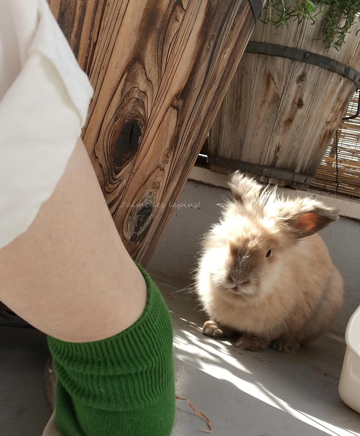 靴下屋の靴下を履いた足元とうさぎ