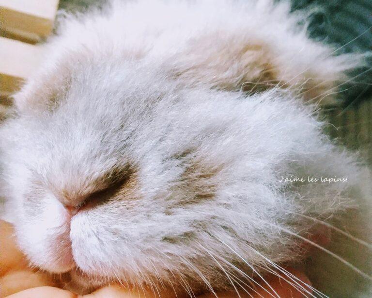 うさぎの小二郎の顔