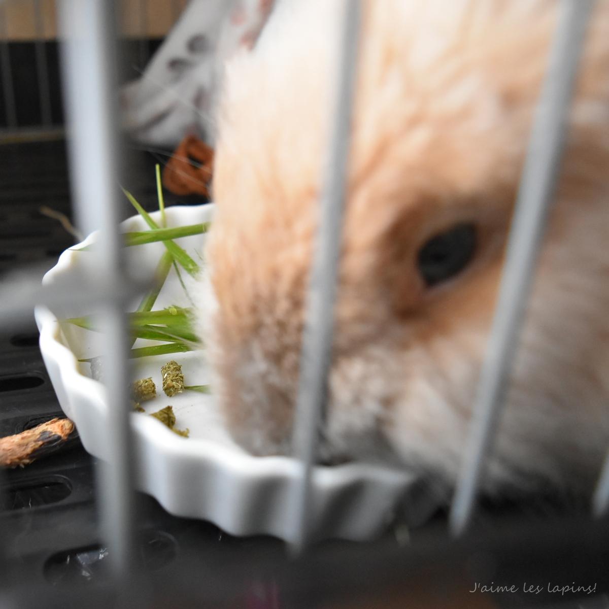 笹を食べるうさぎ