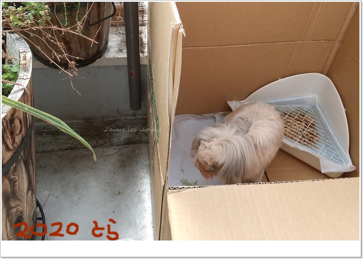 箱の中のおじいちゃんウサギ
