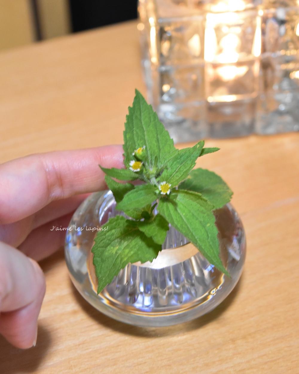 花器「ミチクサ」の使用例