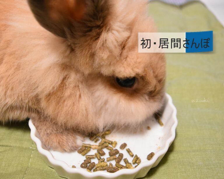 ペレットを食べるうさぎ